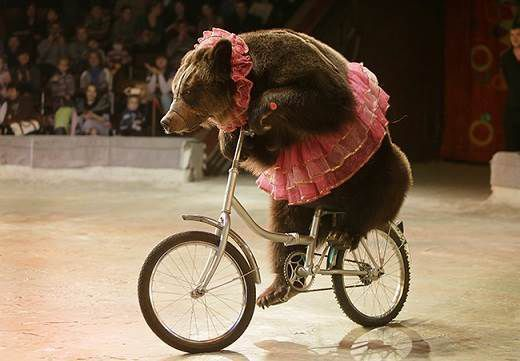 Circus Bears of Consensus - cirbe