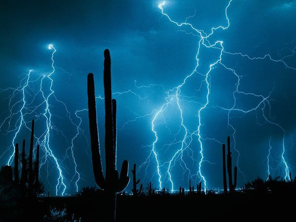 Bridgewater: When Good Ideas Go Bad - Stormy Weather Saguaro Cactus