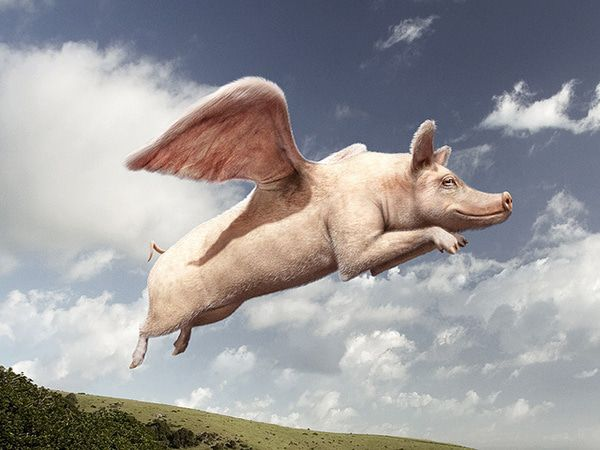 Budget Deal: Pigs Fly In Washington? - pig