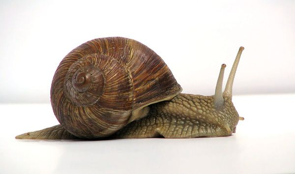 INVESTING IDEAS NEWSLETTER - snail