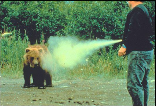 Q&A With Keith: The Biggest Risk to the Bear Case - bear attack bear spray