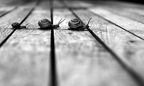 Got #GrowthSlowing Right? We Did. (Back In December) - snails