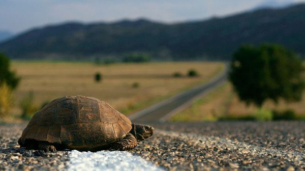 FLASHBACK: #GrowthSlowing (Lots of Charts) - turtlecrossingroad