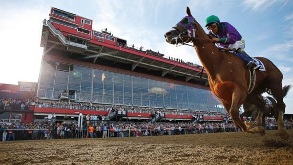 Poll of the Day Recap: 66% Think California Chrome Will Win the Triple Crown - cc2