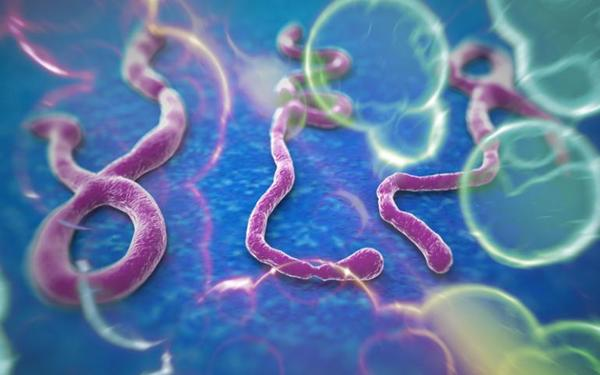 Ebola In New York City; Should We Be Worried? [Key Takeaways From Our Call Yesterday] - ebola virus verge outbreak usa