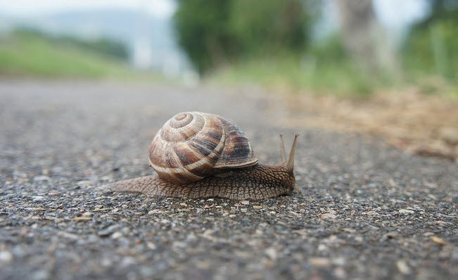 Yes, Growth Is Slowing - z snail
