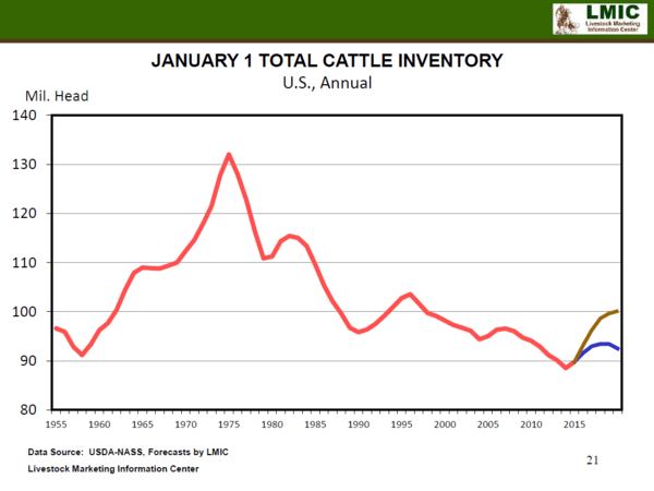 Investing Ideas Newsletter      - total cattle