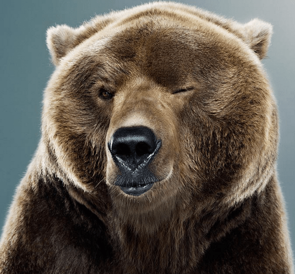 Setting the Record Straight On Our Market Calls - bear winking