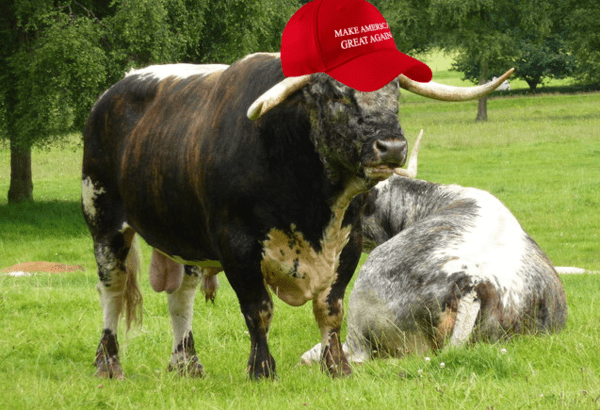 Here Is What's Fueling the Stock Market's Epic Trump Trade - bull make amer