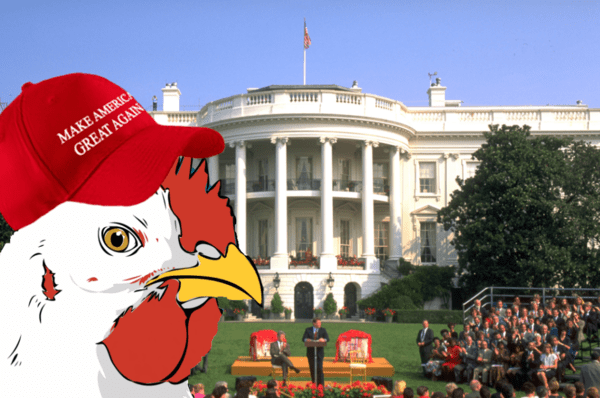 Game Theory: Is Trump Truly Crazy Or Just Playing Chicken? - chicken make america