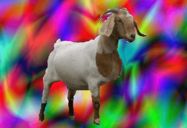 Poll of the Day: Which Do You Trust the MOST? - psychedlic goat