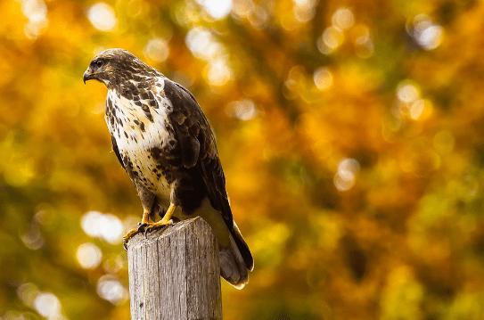 Hawkish Fed = Rates Rising = Financial Up - hawk