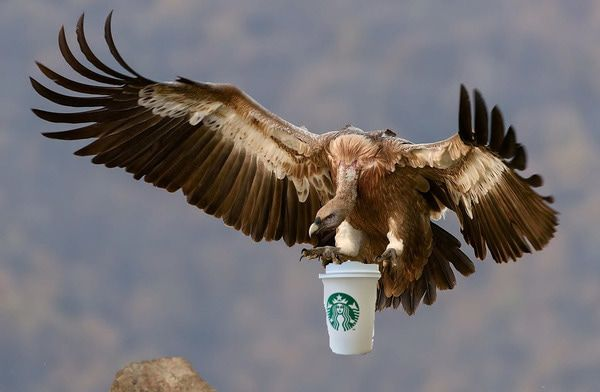 SBUX | Are the Vultures Circling?  - zs3