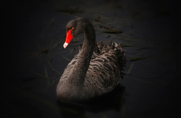 Coronavirus: Is This The Black Swan Many Feared? - 2 3 2020 10 06 13 AM